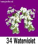 Waterviolet